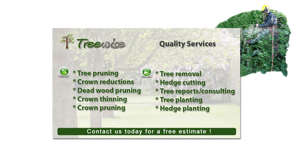 Professional Tree Surgeon, Kerry